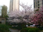 上海も春。